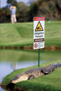 Alligator Liability
